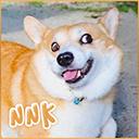 -N_a_n_a_k_o-